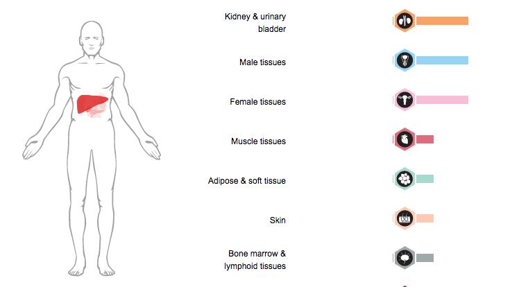 GcMAFs effect on male organs