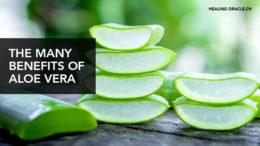 The many benefit of Aloe vera