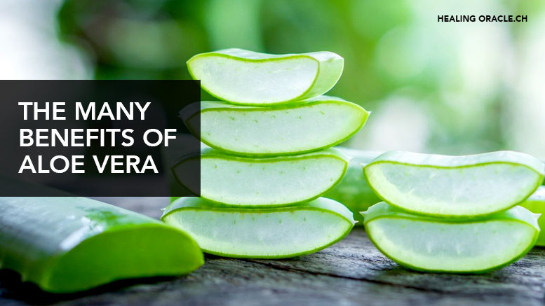 The many benefit of Aloe vera