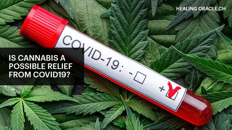 Cannabis Oil for Covid