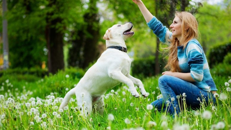 Dog Can 'Sniff' Cancer & Other Diseases
